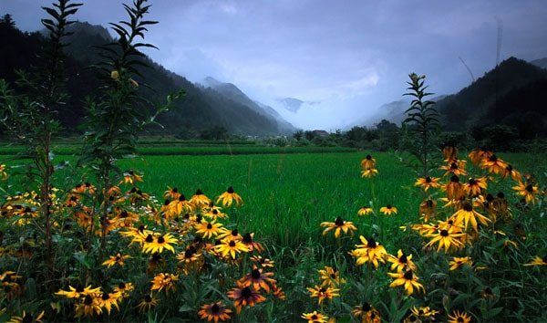 Flowers, Mountains