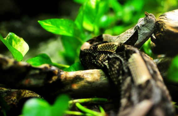 Reptile Photography Collections