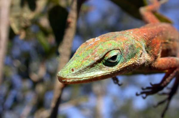 Reptile Photography Collection