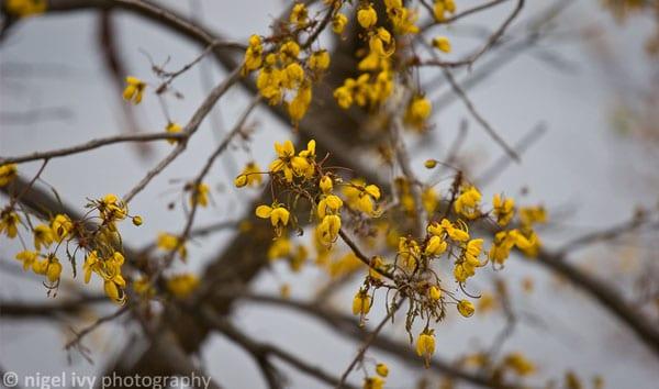 Sjambok Pod Flowers