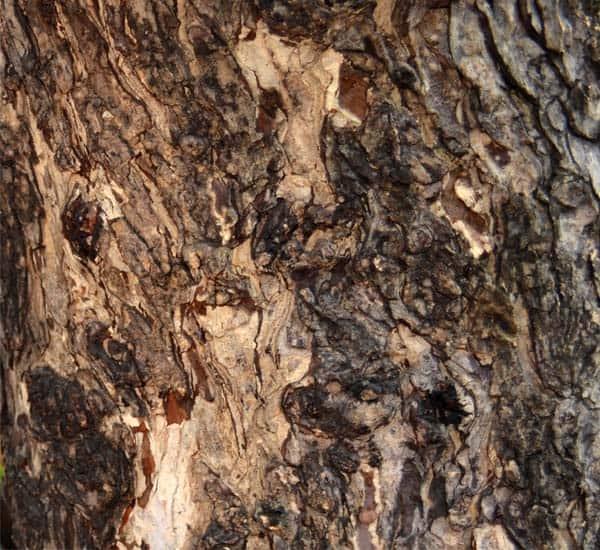 wood_textures