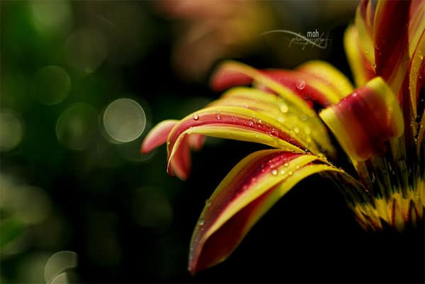 Amazing Bokeh Photography