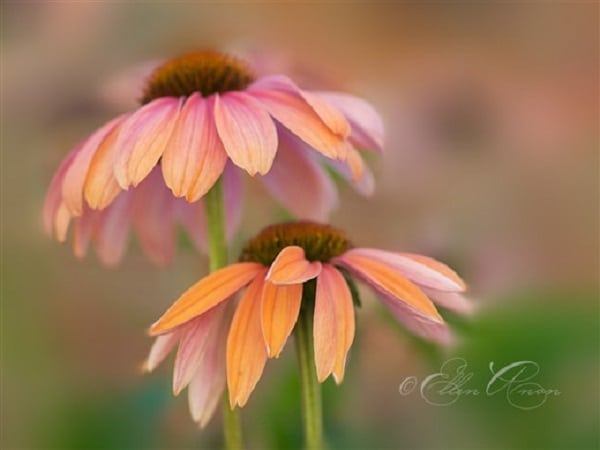 Learn How to Use Photoshop CS6 Blur Gallery Tutorial