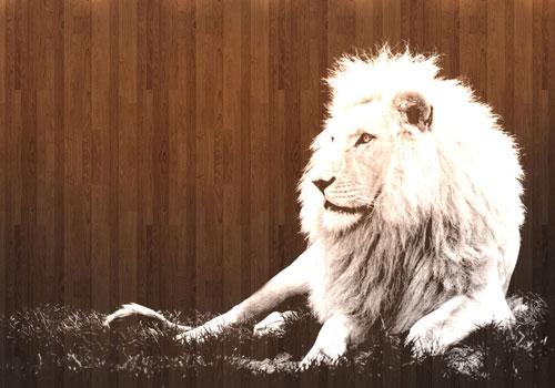 Mac OSX White Lion