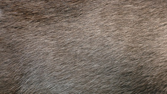 14-High-Resolution-Animal-Fur-Texture-Thumb04