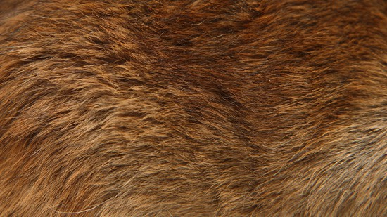 14-High-Resolution-Animal-Fur-Texture-Thumb10