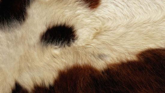 7-Animal-Fur-Texture-Thumb02