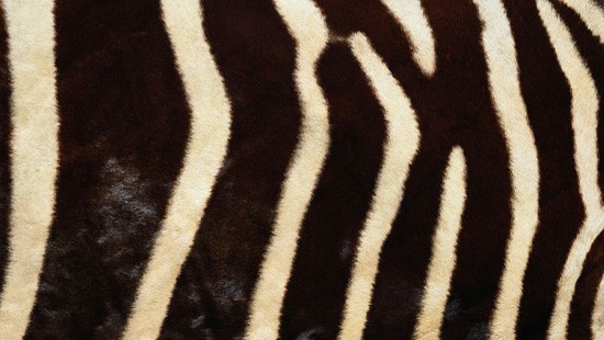 7-Animal-Fur-Texture-Thumb05