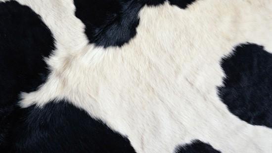 7-Animal-Fur-Texture-Thumb07