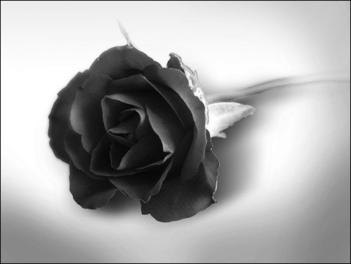 Black-Rose-dark-desktop-backgrounds
