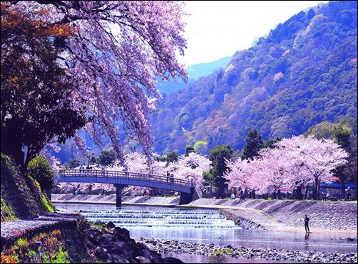 Japanese-Spring-Nature-spring-wallpapers