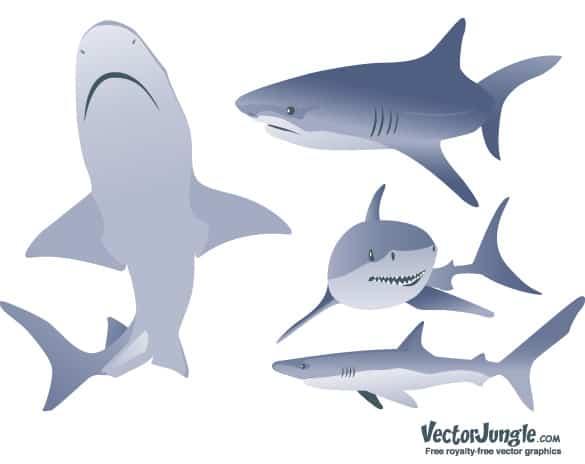 Vector Shark Illustrations