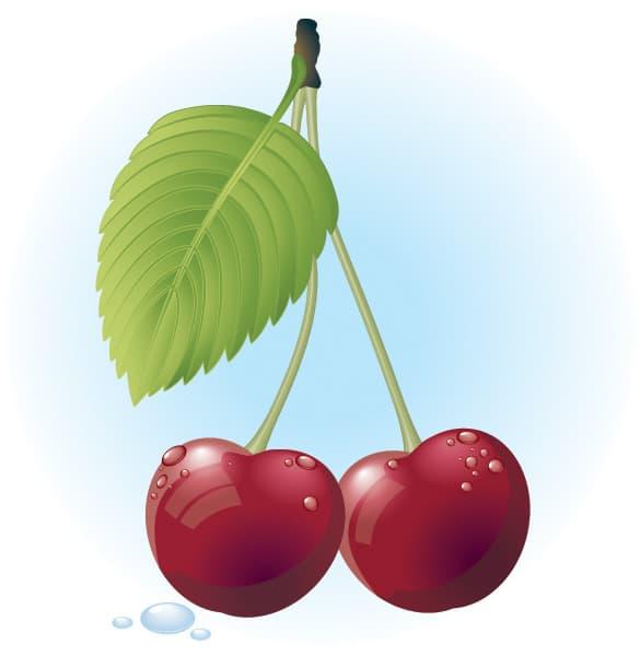 Juicy Red Cherries Vector Illustration