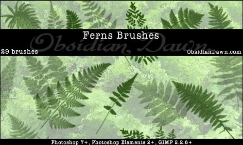 Ferns_Photoshop_Brushes_by_redheadstock