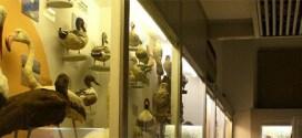 מוזיאון בית אוסישקין
