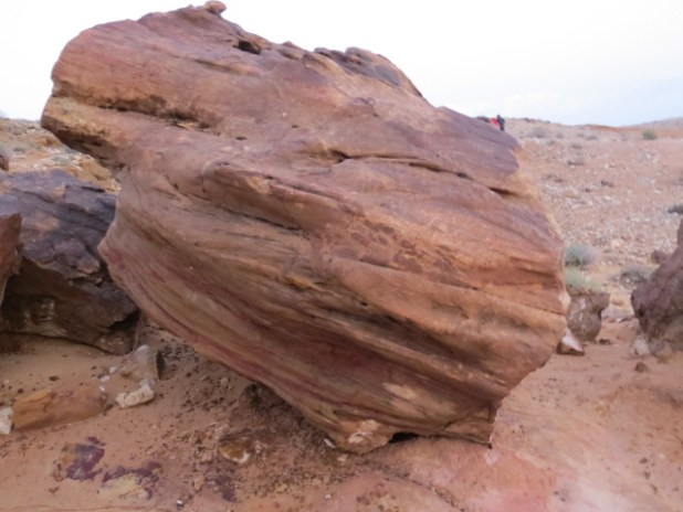 Petrified Forest Fossils