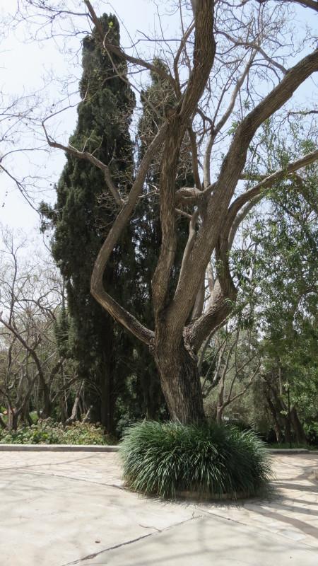 Weizmann Home Garden