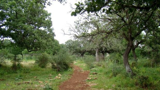 Alonei Abba Nature Reserve