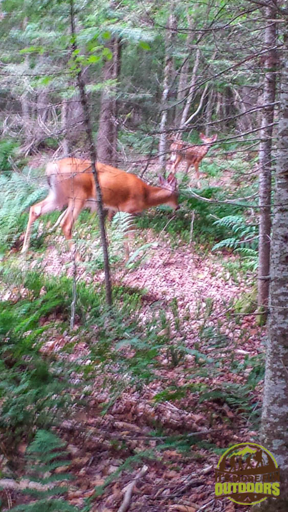 Trail Tip Tuesday: The First Family Backpacking Trip Tip #10: Go some place with a variety of interesting things to do and see. An encounter with deer in the woods behind the cabin!