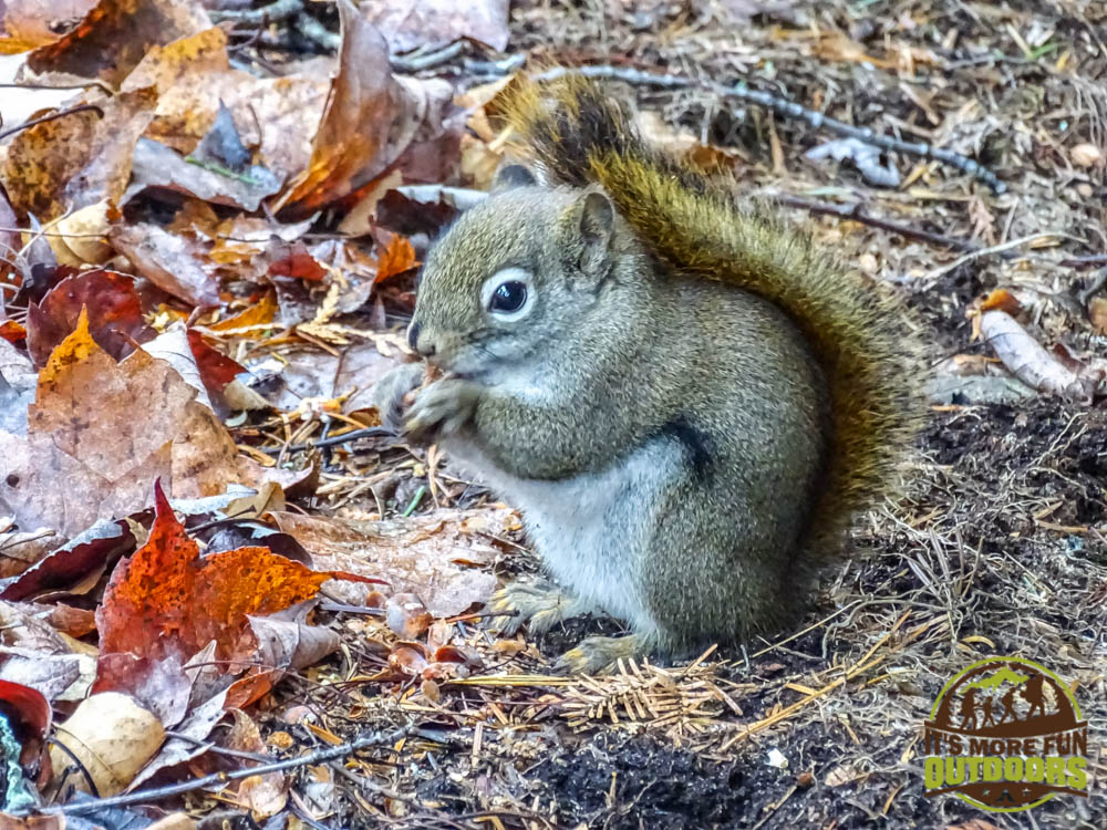 The kids will love the chatty red squirrels found all over the campground! ADK's wilderness Campground at Heart Lake, Lake Placid, NY, Adirondacks