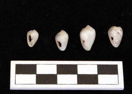 nixtun-fosa-q-4164-3857-l11-shell-beads-3