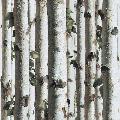 Muriva Bluff Forest Wood Silver Birch Tree Bark Wallpaper J21517