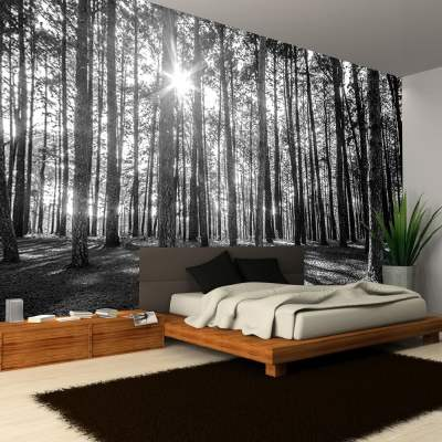 Rainbow Black & White Woodland Forest Mural Photo Giant Wall Decor R223 - Black White | I Want ...