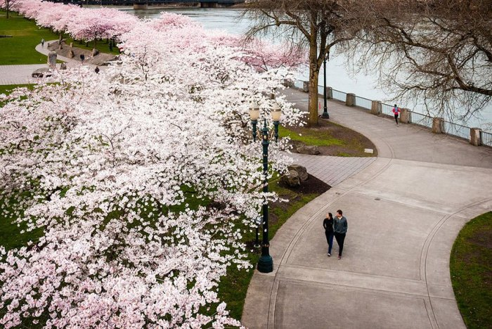 21 Most Beautiful Japanese Cherry Blossom Photos - Pink rules