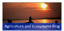 Agriculture and Ecosystems Blog :: International Water Management Institute(IWMI)