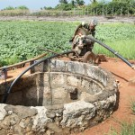 LL-pumping groundwater for irrigation in Jaffna