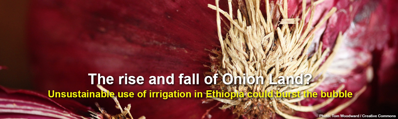 the-rise-and-fall-of-onion-land