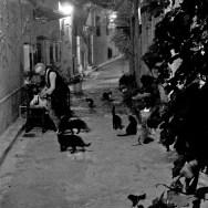An Old Lady Feeding the Cats | Ταϊζοντας τις Γάτες