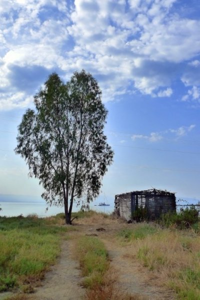 tree and hut by the sea