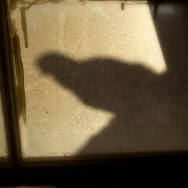 Shadow of a Pigeon | Η Σκιά ενός Περιστεριού