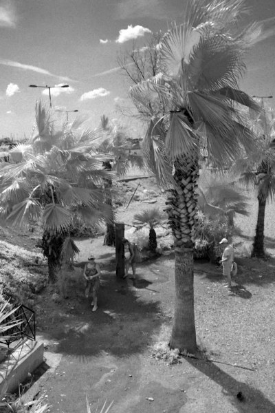 Palm Trees and People