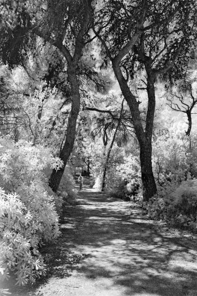 Walkway in the Grove II