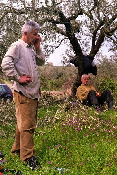 Workers in an Olive Field