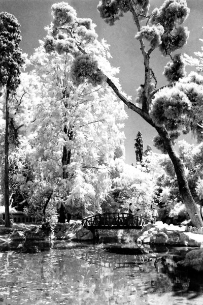 Infrared image of a tree over a pond.