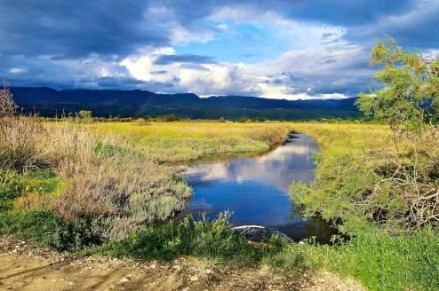 A marshland on a cloudy day.