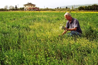 A man collecting herbs in a field.