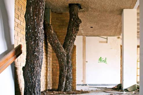 Two tree barks serving as a decoration in an abandoned hotel.