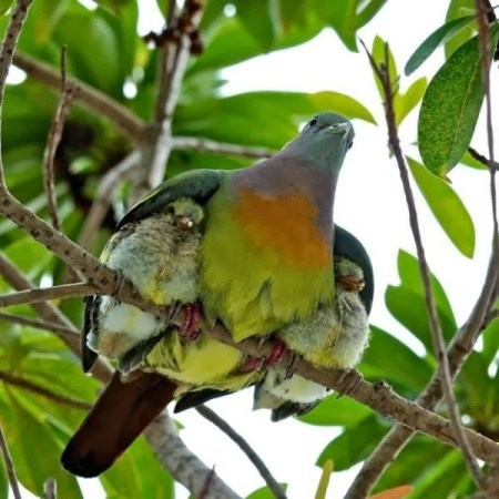 baby birds protected by mother bird