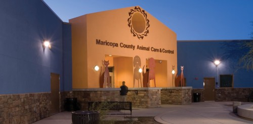 Medium Of Maricopa Animal Care And Control
