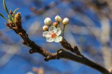 Spring comes earlier in California