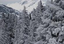Résineux et montagne