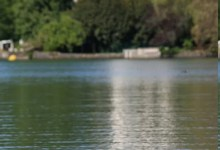 poule d'eau seule sur son ponton
