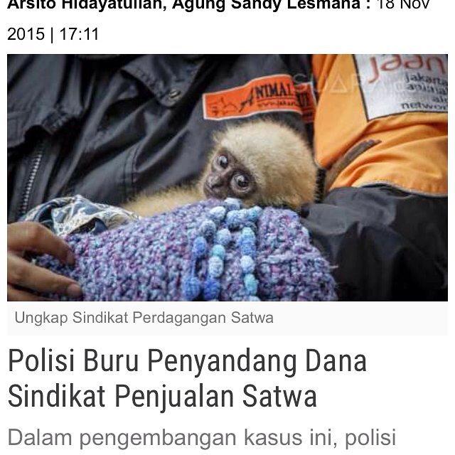 Justice! stopwildlifetrade prowildlife stopwdlifecrime stopexploitation animals wildlifeindonesia jakartaanimalaidnetwork