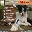 Tessa has found her forever home with a beautiful family!
