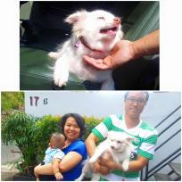 JAAN rescued little Oma a while ago from a horrible puppy mill in Bekasi. She was the only small dog, the rest were all Golden Retrievers. Oma needed many months to recover and since she is not young anymore we thought we were not able to find her a home. Well we were wrong about that! Today Oma went home with her new family and we are sure she will be well taken care off. We are going to miss this sweet and jolly girl sooo much. Thank you Pandu and family for giving Oma a home! Thankfully you live near our center so we can visit some time!