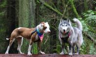 Megan & Taffy. These are both JAAN rescue dogs that are now, after being adopted, living a happy life in Vancouver, Canada!